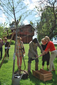 Dalarnas landshövding Maria Norrfalk, Gustav Vasa (alias Nisse Nyström) och Ornässtugans intendent Deborah Clemons planterar Sveriges Riksträd Ornäsbjörken som en del av ceremonin. Till vänster trädgårdsmästare Helena Eriksson som skänkt björken.