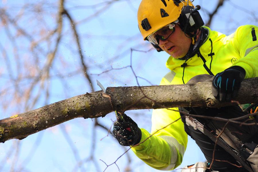 Nu är Silky Zubat Arborist Professional 330-5,5 Här!